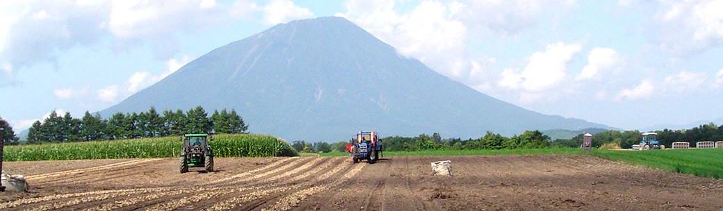 馬鈴薯収穫風景